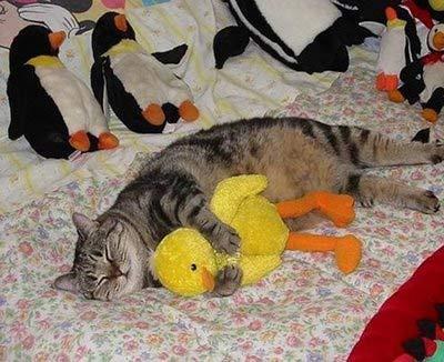 Смях в картинки - Page 11 Sleeping-kitty-1